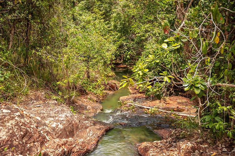 Córrego passa entre área de preservação de mata nativa da Bracell
