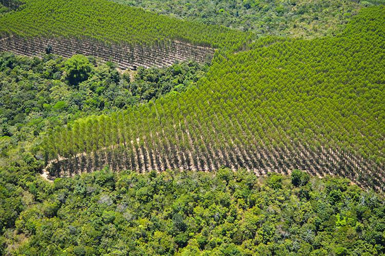 Vista aérea de um mosaico florestal nas áreas da Bracell na Bahia