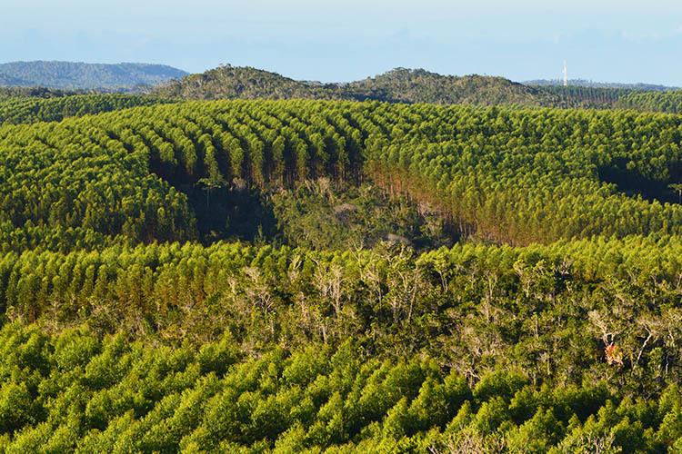 Imagem aérea de uma área de preservação de mata nativa da Bracell na Bahia.